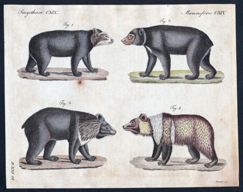 Säugethiere CXIX - Bär bear Bären bears Säugetier Kupferstich Bertuch antique print Chilesischen Anden Malaiis