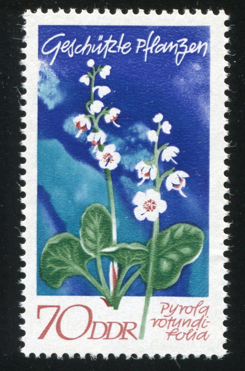 1568 Pflanzen 70 Pf mit PLF roter Strich links am o von rotundi, Feld 19 ** 1