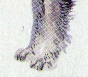 1798 Mittelschnauzer - 10er-Bogen mit PLF Strich über Vorderpfote, Feld 4, **