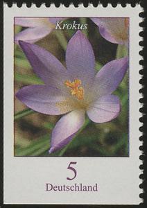 2480Eu Blumen 5 C Elfenkrokus, links und unten geschnitten, **