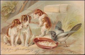 Präge-Ansichtskarte Elster stiehlt Essen von Hundewelpen, BREYELL 4.7.1903