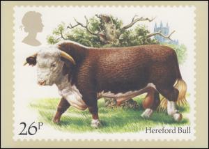 Großbritannien: 981 Rinderrasse Hereford Bull auf AK mit ET-O OXFORD 6.3.1984