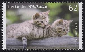 3125 Tierkinder: Wildkatze **