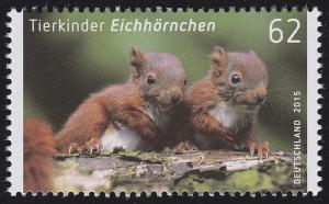 3124 Tierkinder: Eichhörnchen **