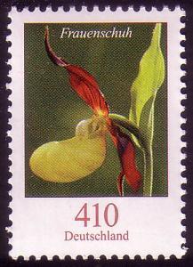 2768 Blume 410 C Frauenschuh **
