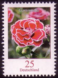 2694 Blume 25 C Gartennelke **