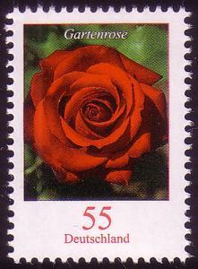 2669 Blume 55 C Gartenrose **