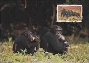 Sierra Leone WWF: Affen - Schimpansen 10 C + 60 C 1983 auf 2 Maximumkarten ESSt