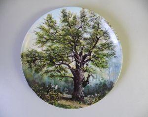 Sammelteller Zierteller Uralte Riesen Dicke Marie Baum / Tirschenreuth Porzellan