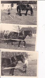 3 Orig. Fotos Bauer mit Pferd Geschirr Egge ca. 1950