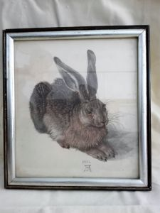 Hase- Druck -  Albrecht Dürer