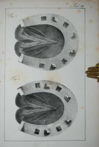 Schwab - Katechismus der Hufbeschlagkunst - 1851