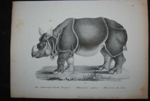 Schinz - Lithographie - Nashörner - 2 Blätter - ca. 1827