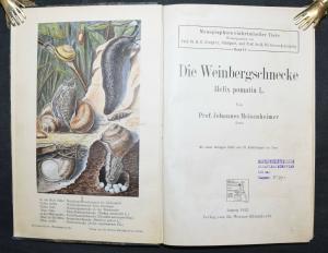 DIE WEINBERGSCHNECKE - ERSTE UND EINZIGE AUSGABE - 1912 - MOLLUSKEN