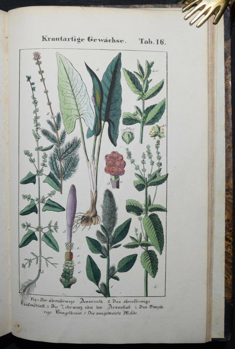 POPULÄRE BOTANIK - 1837 - CH. F. HOCHSTETTER - HANDKOLORIERTE TAFELN 10