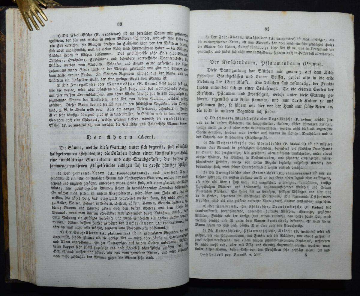 POPULÄRE BOTANIK - 1837 - CH. F. HOCHSTETTER - HANDKOLORIERTE TAFELN 4