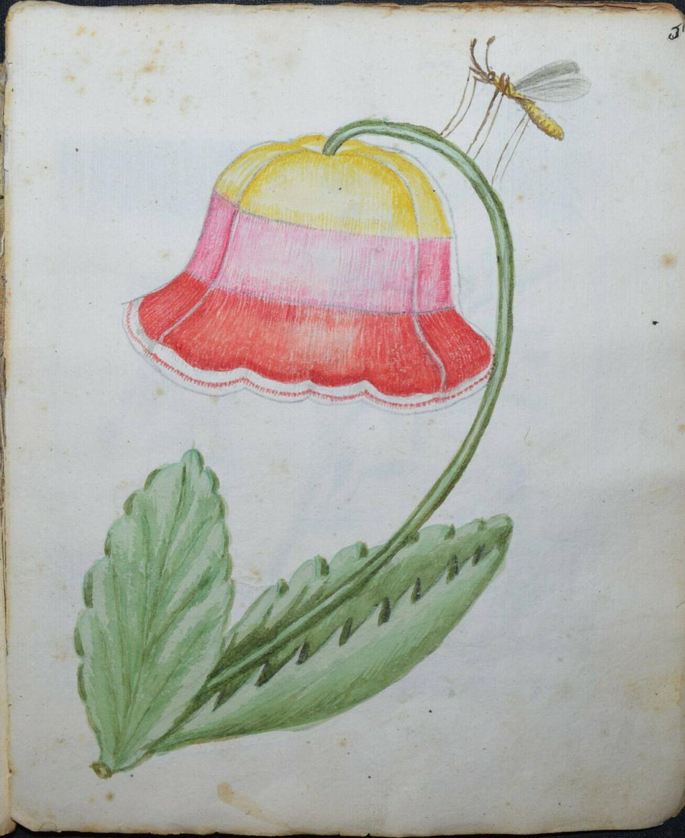 22 ORIGINAL-AQUARELLE - SEHR SCHÖNES ZEICHENBUCH EINES PÄDAGOGIK-STUDENTEN 1770 1