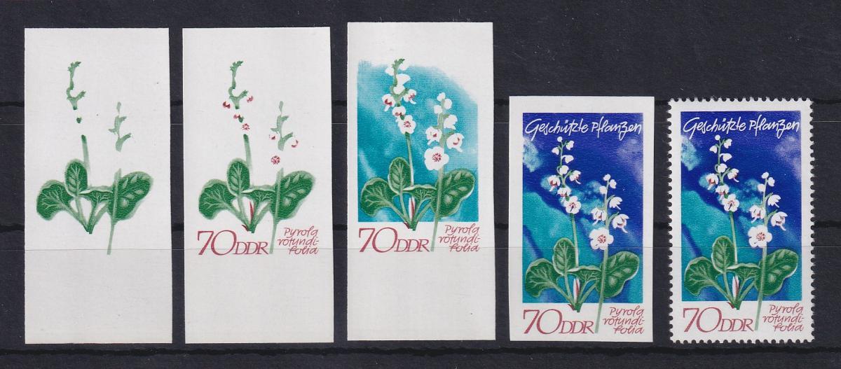 DDR 1970 kpl. Serie Phasendrucke Mi.-Nr. 1568 Pflanzen Wintergrün 70 Pfg **  0