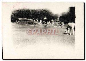Photo Paris Exposition coloniale 1931 Animaux Zoo Zebre