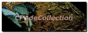 Moderne Karte Alcedo Atthis Eisvogel Martin Pecheur Kingfisher