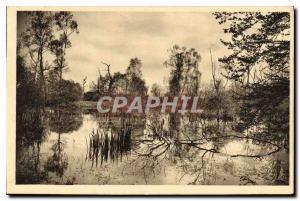 Ansichtskarte AK Fontainebleau S et M la Foret Mare aux Fees