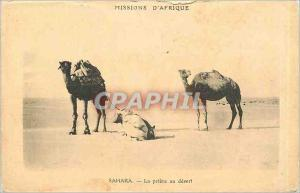 Ansichtskarte AK SAHARA - La pri�re au d�sert Chameaux