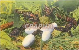 Ansichtskarte AK Alligator Egg Hatching in Florida Crocodile