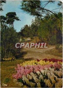 Moderne Karte Sur la Cote de Lumiere La Tranche sur Mer Vendee Les Floralies