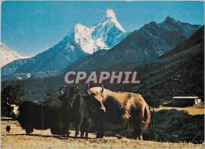 Moderne Karte Mt Amadablam and Yak Nepal