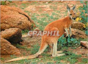 Moderne Karte Australia Australian Kangaroo