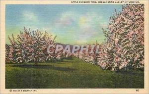Ansichtskarte AK Shenandoah Valley of Virginia Apple Blossom
