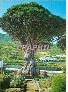 Moderne Karte Tenerife Icod de los Vinos
