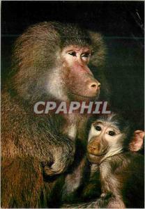 Moderne Karte African Fauna Baboons Singes