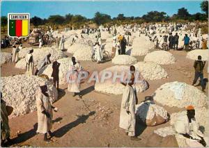 Moderne Karte Republique Unie du Cameroun La recolte du coton