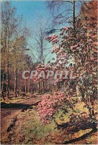 Moderne Karte Rhododendrons at inverewe estate wester ross