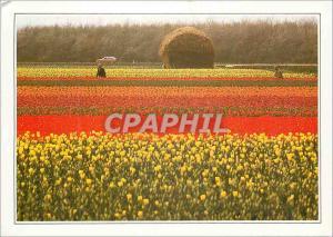 Moderne Karte Hollande Champs des fleurs