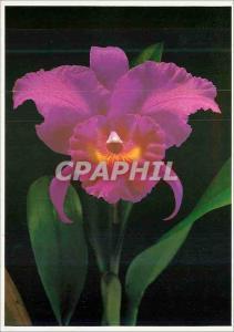 Moderne Karte Orchidee Flowers Tahitian gardens