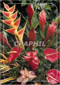 Moderne Karte Guadeloupe Bouquet tropical