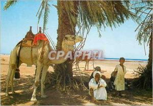 Moderne Karte Nuiba Sinai