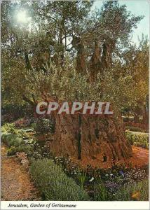 Moderne Karte Jerusalem Jardin de Gethsemani Oliviers antiques