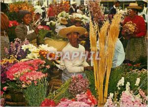 Moderne Karte Madagascar Tananarive Marche aux fleurs au Zoma