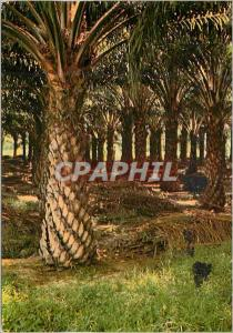 Moderne Karte Oil palms Next to rubber Malaysia's most important agricultural crop