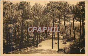 Ansichtskarte AK Pyla sur Mer Gironde Les pins vers la grande dune