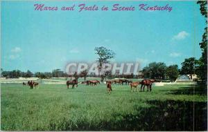Moderne Karte Mares and Foals In Beautiful Kentucky