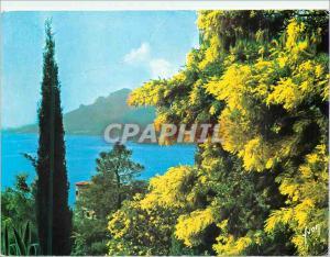 Moderne Karte Couleurs et Lumiere de France La Cote d'Azur Les Mimosas en Fleur