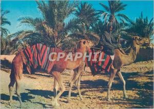 Moderne Karte Sahara marche dans l oasis Chameaux