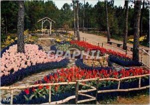 Moderne Karte Cote de Lumiere La Tranche Sur Mer Vendee Les Floralies exposition Mars Avril