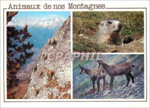 Ansichtskarte AK Animaux de nos Montagnes Images Chez nous Jeunes Bouquetins Marmotte Chamois