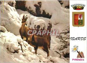 Moderne Karte Isards en Hiver Pyrenees Faune et Couleurs de la Montagne