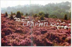 Moderne Karte Images de Nos Campagnes Moutons